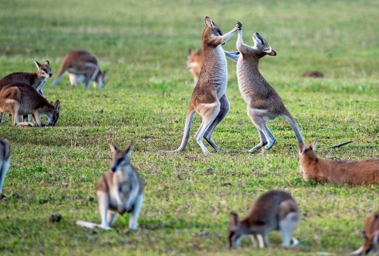 Moving to Australia? 5 Common Questions Answered!